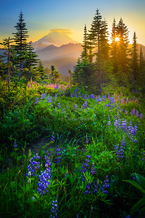 The sun is setting behind Mount Rainier from Naches Peak loop trail