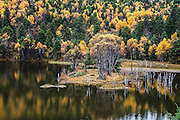 Lake and forest in Autumn Colours Photographed in China