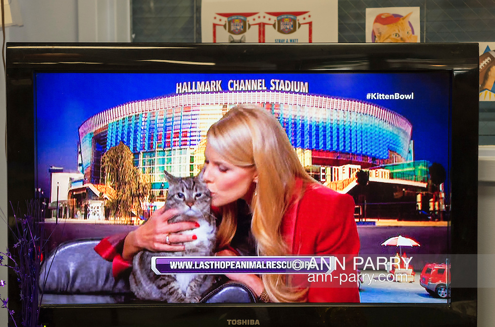 Wantagh, New York, USA. 7th February 2016. Host BETH STERN kisses tabby cat ALEXANDER, the Mayor of Last Hope Rescue, and tells the audience he is available for adoption, during Hallmark Channel Kitten Bowl III. Last Hope Animal Rescue has an Open House where the adoption center's volunteers and visitors watch the game on TV and cheer on their team, the Last Hope Lions. Over 100 adoptable kittens from Last Hope Inc and North Shore Animal League America participated in the taped games, and the Home and Family Felines won the 2016 championship, which first aired the day of Super Bowl 50.