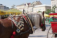 Horse carriages in Rynek Glowny Krakow Poland