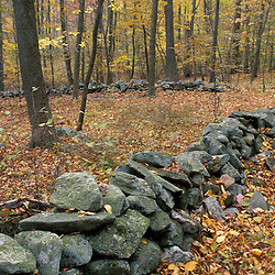 An old stone wall in an oak-hickory forest in Connecticut's Litchfield Hills.  Kent School property currently part of a TPL project.  Kent, CT