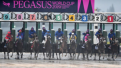January 26, 2019 - Hallandale Beach, FL, USA - Horses break from the gate during the Pegasus World Cup on Saturday, Jan. 26, 2019, at Gulfstream Park in Hallandale Beach, Fla. (Credit Image: © Michael Laughlin/Sun Sentinel/TNS via ZUMA Wire)