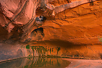 The Golden Cathedral of Neon Canyon, Grand Staircase Escalante National Monument Utah