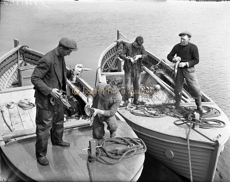 """Carna.  Boat Building with the Cloherty family..14th May 1959 Back in the still of the harbour at Ard Thiar, Carna, Co. Galway, these lobster fishermen examine their catch. here the owners of the """"Cailin"""" and the """"MacDara"""", Seosamh O Connaighle (left) with his helper Sean Og Mac Domchadha and Sean Mac Donnchadha and his son Seosamh sort through their catch.<br /> Carna. Saoirseacht Bád le Clann Uí Chlochartaigh, 14ú Bealtaine 1959. Iascairí agus úinéirí na mbád """"Cailín"""" agus """"Mac dara"""" ag scrúdú na gliomaigh atá faighte acu: Seosamh Ó Conghaile (ar chlé) agus a leathbhádóir Seán Óg Mac Donnchadha, agus Seán Mac Donnchadha agus a mhac Seosamh"""