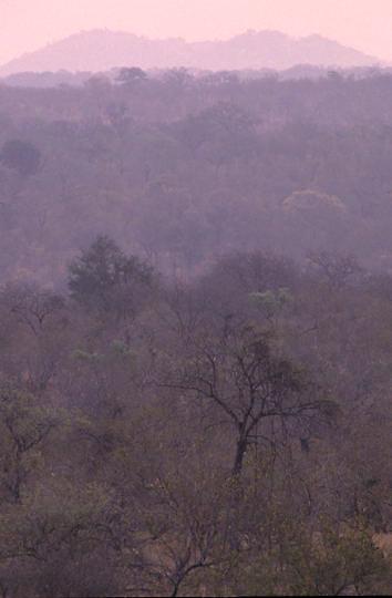 Kruger National Park, evening sunset filters light across bushveld. South Africa.
