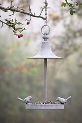 Bird feeder hanging in hawthorn tree