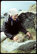 03: SEABIRDS EIDER DOWN CLEANING & DRYING