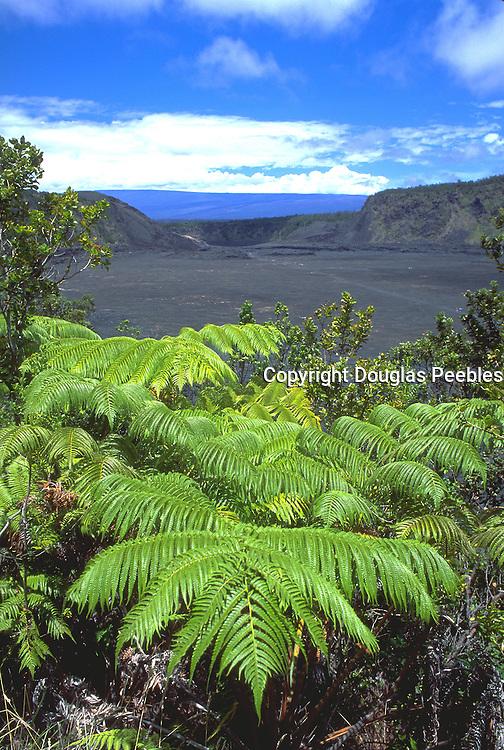 Fern, Kilauea Volcano, Hawaii Volcanoes National Park, Island of Hawaii, Hawaii, Hawaii, USA<br />