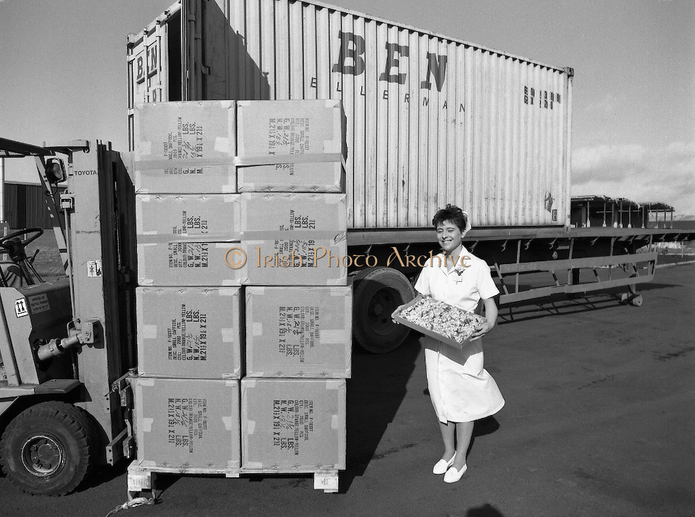 Nurse With Daffodils (Irish Cancer Society)  (R96)..1989..20.02.1989..02.20.1989..20th February 1989..At Container Agencies,Airways Industrial Estate, Dublin a consignment of daffodils arrived for The Irish Cancer Society. The daffodils will be sold to raise funds for the society in their battle against the disease which affects one in three of the Irish population...Image shows a nurse from the cancer society displaying some of the daffodils which will be sold over the coming days.