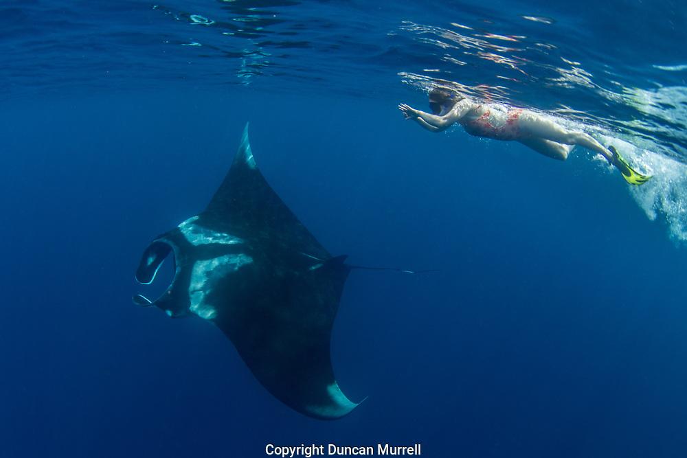 Oceanic manta ray ( Manta birostris ), Honda Bay, Palawan, the Philippines Snorkeller swimming with an oceanic manta ray (manta birostris)