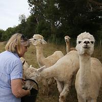Summerhill Farm Alpacas