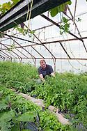 Organic market gardener Frédéric Stopin , Marais Audomarois, Saint-Omer, France © Rudolf Abraham