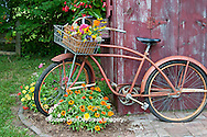 63821-22217 Old bicycle with flower basket next to old outhouse garden shed.  Red Wing Begonias, Zinnias, Snapdragons  (Antirrhinum sp.)  Marion Co., IL