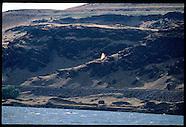 19: TRAIL KITE & WINDSURF, COLUMBIA RIVER