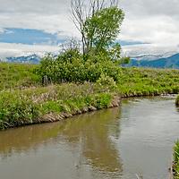 Hyalite Creek flows between pastures in Montana's Gallatin Valley, near Bozeman.
