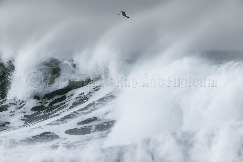Black and white wave picture with seagull | Bølgebilde med måke i sort hvitt