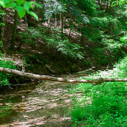 Sheick Hollow State Nature Preserve