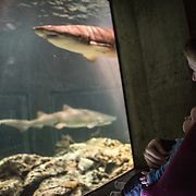 A mother and her baby son watch sharks swim by in the shark tank of the National Aquarium in Inner Harbor in Baltimore, Maryland.