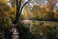Central Park, Nov. 9, 2020.