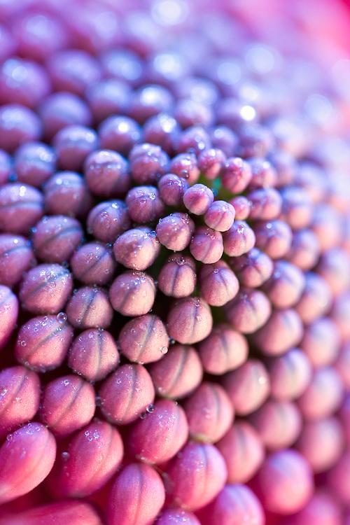macr of flower buds texture look