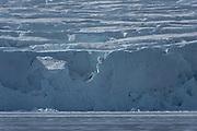 Polar Bear<br /> Ursus maritimus<br /> Svalbard<br /> Norway<br /> Arctic Ocean<br /> Endangered