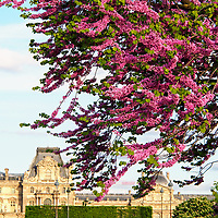After a long winter, it felt so good to look at trees in blossom in Tuileries garden!