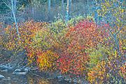 Autumn colors along the  Kaministiquia River<br />Kakabeka Falls Provincial Park<br />Ontario<br />Canada