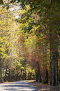 Autumn foliage in the Cataloochee Valley of the Great Smoky Mountains National Park in Cataloochee, North Carolina.