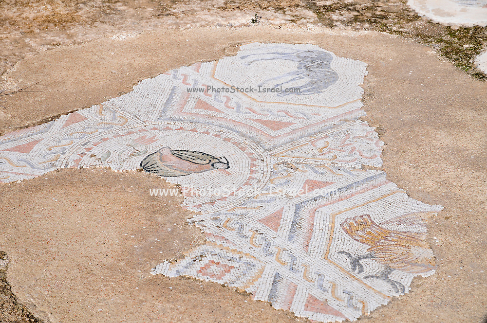 The Monastery of Martyrius, now located in the center of the Israeli settlement and city of Ma'ale Adumim, east of Jerusalem, was one of the most important centres of monastic life in the Judean Desert during the Byzantine period. Details of the mosaic floor