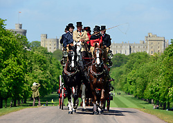 © Licensed to London News Pictures. 10/05/2013. Windsor, UK The Coaching Marathon takes place on the Long Walk against the backdrop of Windsor Castle. The Royal Windsor Horse Show, set in the grounds of Windsor Castle. Established in 1943, this year will see the Show celebrate its 70th anniversary. Photo credit : Stephen Simpson/LNP