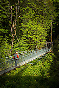 Rear view of a hiker hiking along a footbridge in a forest near the beginning of the Routeburn Track from the Routeburn Shelter, South Island, New Zealand