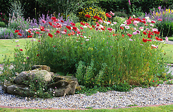 Gravel circle edged with bricks and planted with poppies - Papaver rhoeas Mother of Pearl / Fairy Wings in Helen Yemm's garden