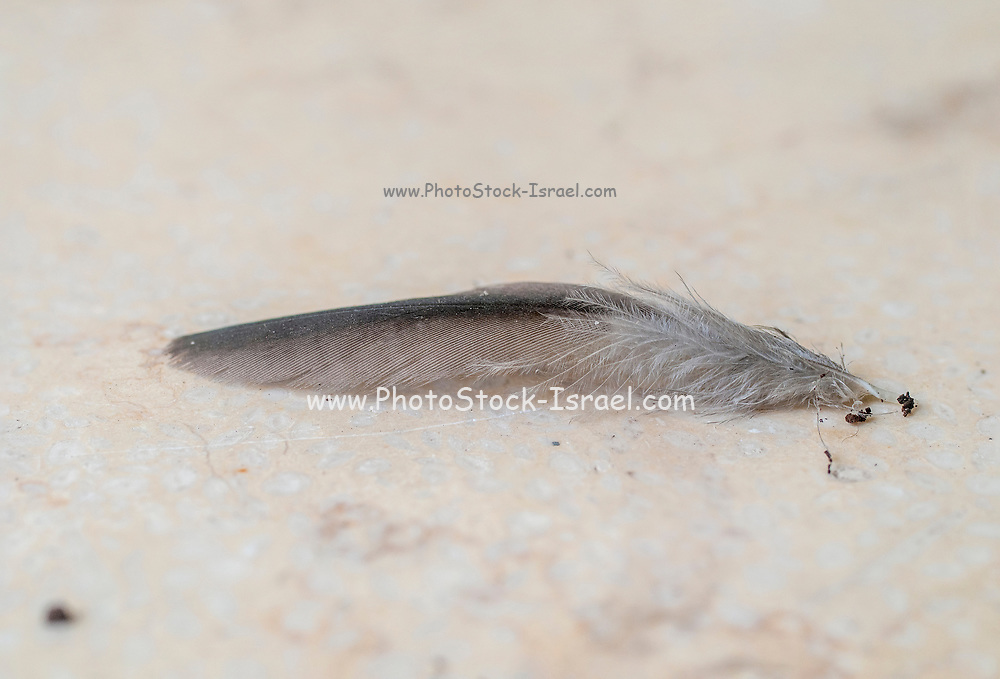 Bird's feather close up