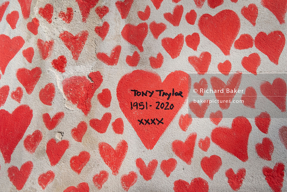 A detail of red hearts on the wall that forms the National Covid Memorial Wall, a tribute to the 150,000-plus British victims of the Coronavirus pandemic. Tony Taylor is mentioned as succumbing in 2020. Bereaved family and friends of Covid-19 victims have started working on the wall located outside St Thomas' Hospital, and which faces the Houses of Parliament in Westminster, on 30th March 2021, in London, England. Prime Minister Boris Johnson was treated for Covid at St Thomas' last year.