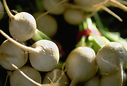 Close up selective focus photograph of bunches of Japanese White Turnips