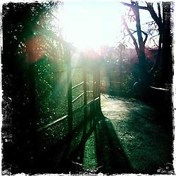 Edinburgh Zoo..Hipstamatic images taken on an Apple iPhone..©Michael Schofield.