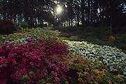 Rhododendron Garden, Mt. Dandenong, Australia<br />