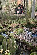 Saußbachklamm bei Waldkirchen, Bach mit Felsen und Moos, Bayerischer Wald, Bayern, Deutschland | Saussbach gorge near Waldkirchen, creek with rocks and moss, Bavarian Forest, Bavaria, Germany