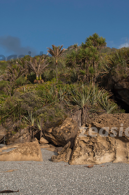 A collapsed limestone cave at a beach of the west coast shore line of the Paparoa National Park, with lush vegetation overgrowing the rubble.