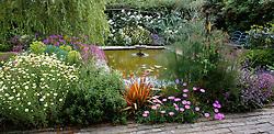 General view of the pond in summer with Anthemis tinctoria 'Sauce Hollandaise', Geranium palmatum, Phormium 'Sundowner' and Rosa 'Iceberg'
