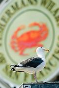 A seagull sits in front of the famous Fisherman's Wharf sign in San Francisco.
