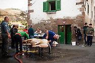 A professional butcher (in blue overalls) and some more men scrape with a knife a dead pig's skin as women prepare blod for blod sausages in traditional way pig slaughtering.  Doneztebe (Basque Country). December 08. 2016. The slaughter traditionally takes place in the autum and early winter and the work often is done in the open. (Gari Garaialde / Bostok Photo)