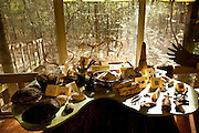 Wildlife display at Francis Beidler Forest at Four Holes Swamp, Dorchester County, SC