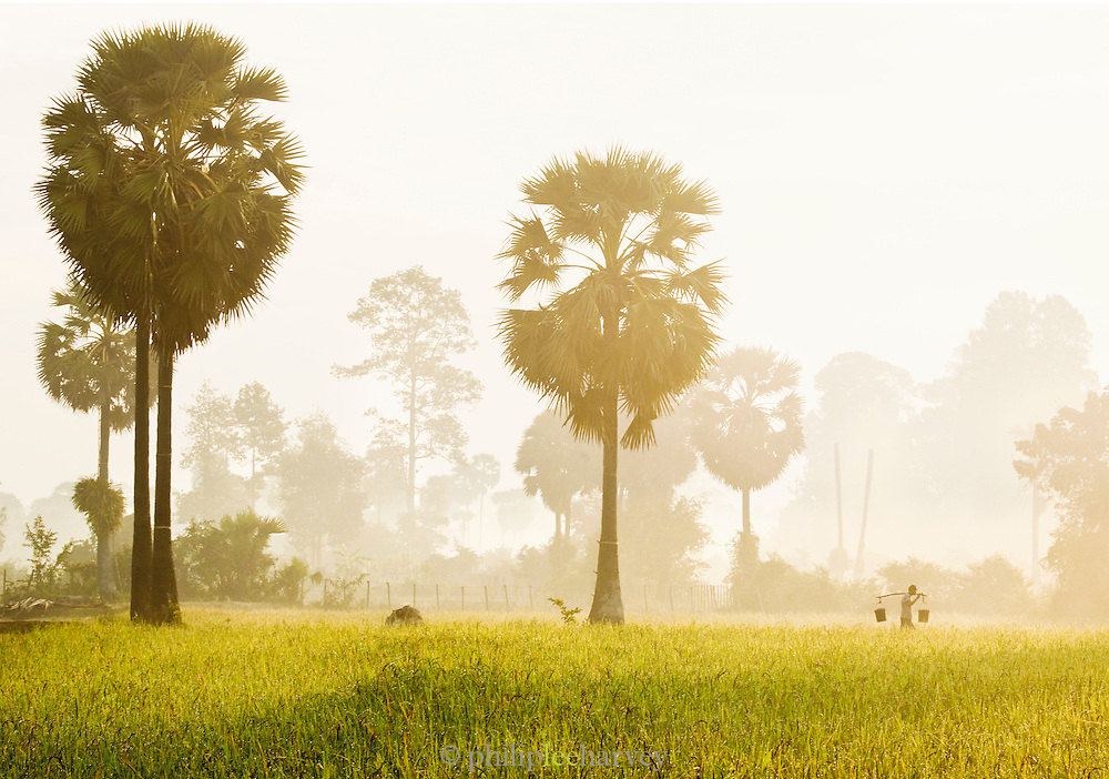 A man carries water in buckets accross a rural field in Siem Reap Province, Cambodia