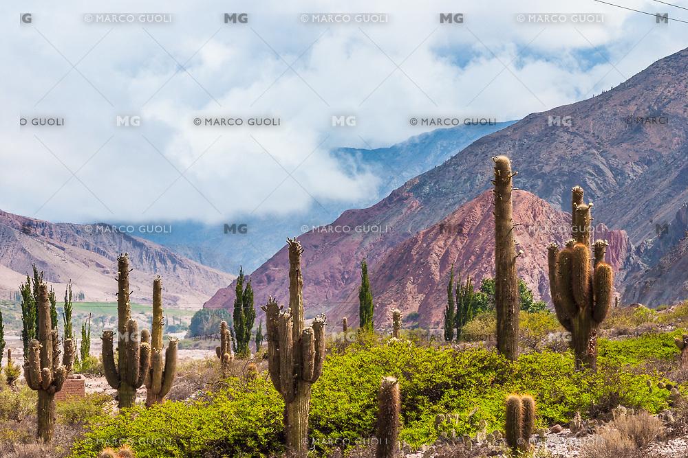 CARDONES (Trichocereus sp.) Y VALLE DEL RIO GRANDE, QUEBRADA DE HUMAHUACA, PROV. DE JUJUY, ARGENTINA