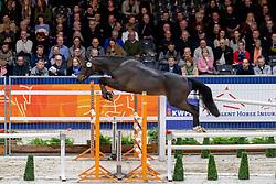 127, More Special<br /> KWPN hengstenkeuring - 's Hertogenbosch 2020<br /> © Hippo Foto - Dirk Caremans<br />  30/01/2020