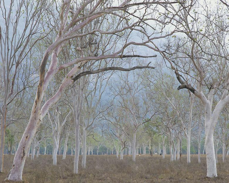 Rural Property<br /> Mt Elliot<br /> Townsville region