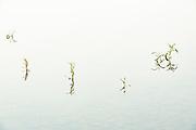Aquatic plants reflected in water <br />Ear Falls<br />Ontario<br />Canada