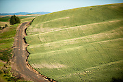 A dirt road curves its way through the farmland in the Palouse Region of Washington State.