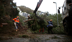 South Africa - Cape Town - 10 July 2020 - City of Cape Town workers clearing an Uprooted tree caused by a mudslide in Camps Bay that resulted in road closures at Kloof and Lower Kloof and Kloof and Nettleton. Brendan Magaar/African News Agency(ANA)